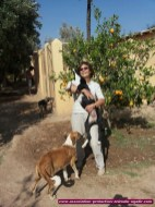 association-protection-animale-agadir-36