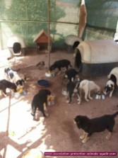association-protection-animale-agadir-39