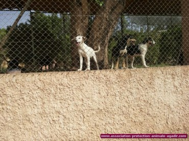 association-protection-animale-agadir-51