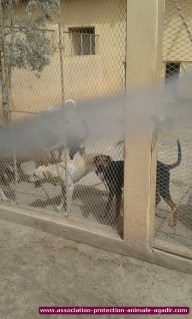 association-protection-animale-agadir-69