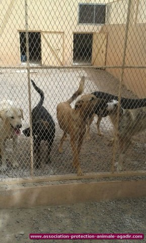 association-protection-animale-agadir-75