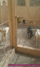 association-protection-animale-agadir-77