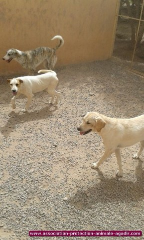 association-protection-animale-agadir-81