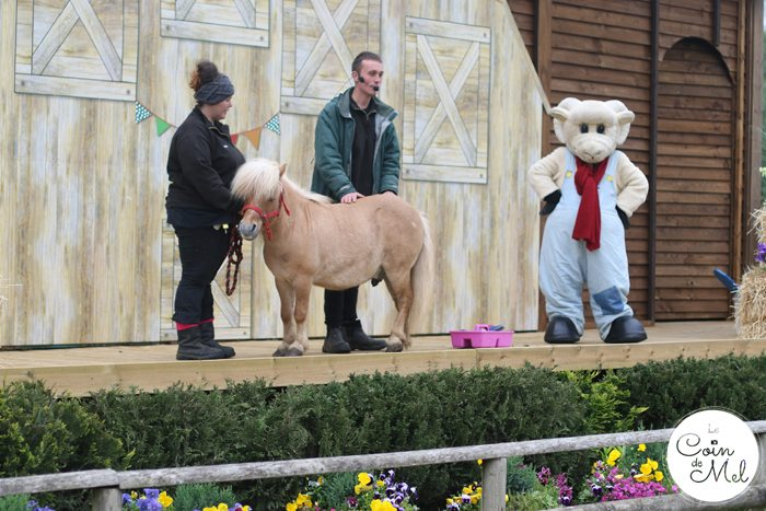 A Rainy Day at Willows Farm & a Few Facts about Sheep Shearing - Pony