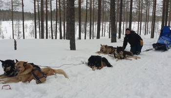 Meryl recherche un poste de handler-musher
