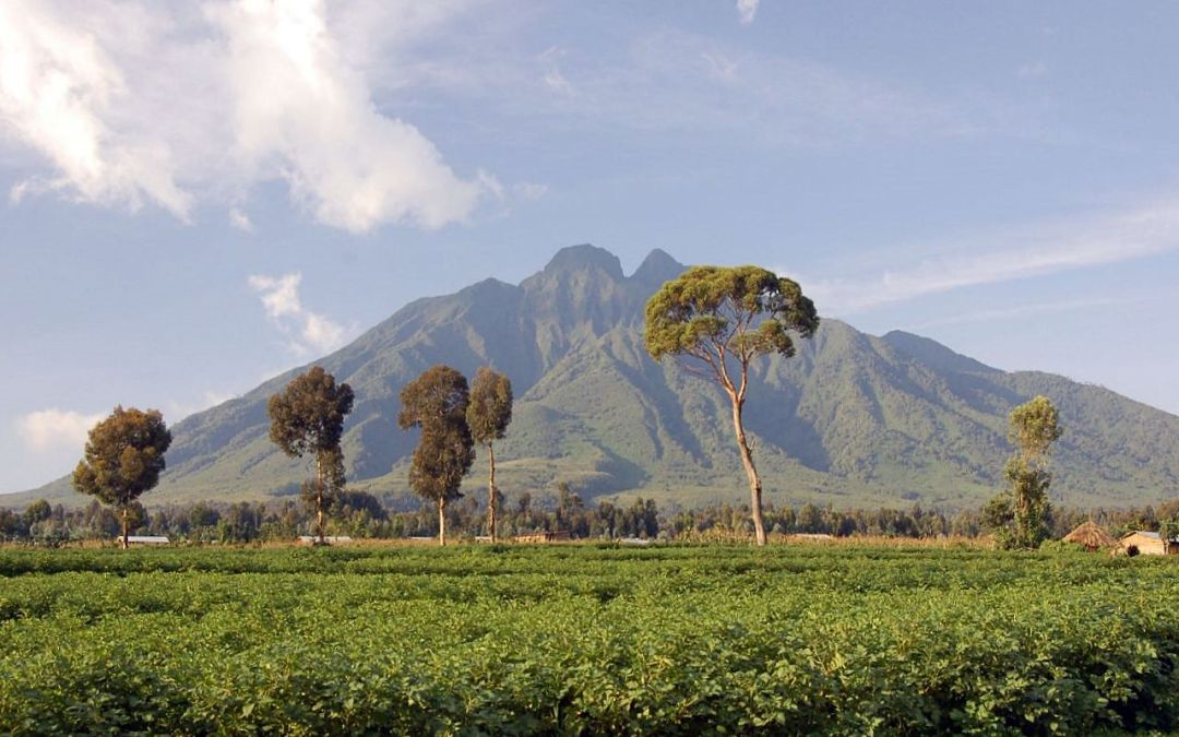 Parco del Virunga, i bracconieri uccidono 12 ranger