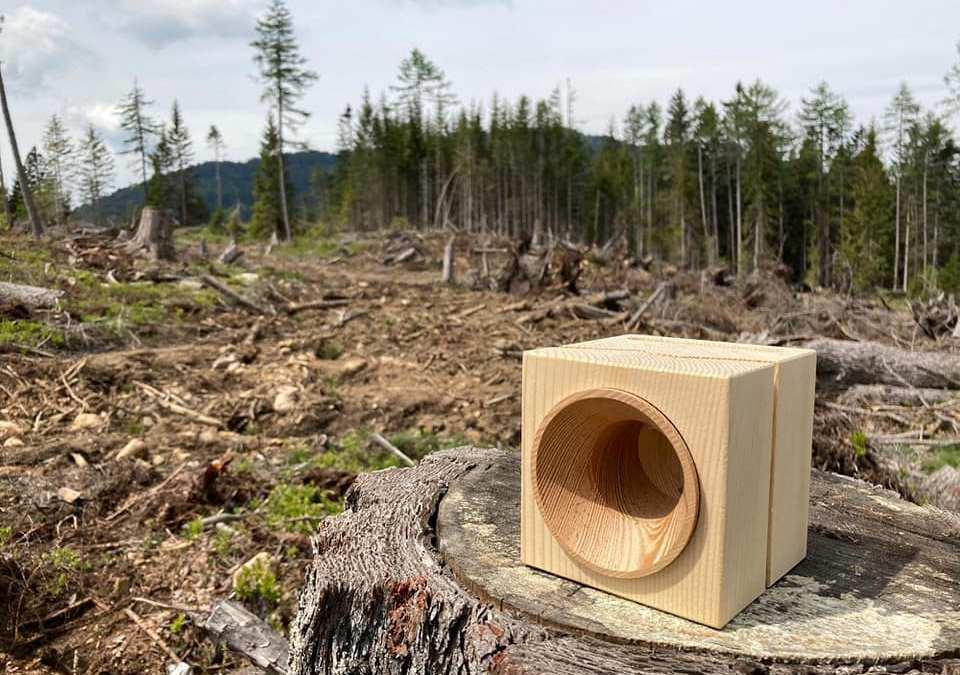 Vaia: dalla strage di alberi alla cassa che rigenera la foresta