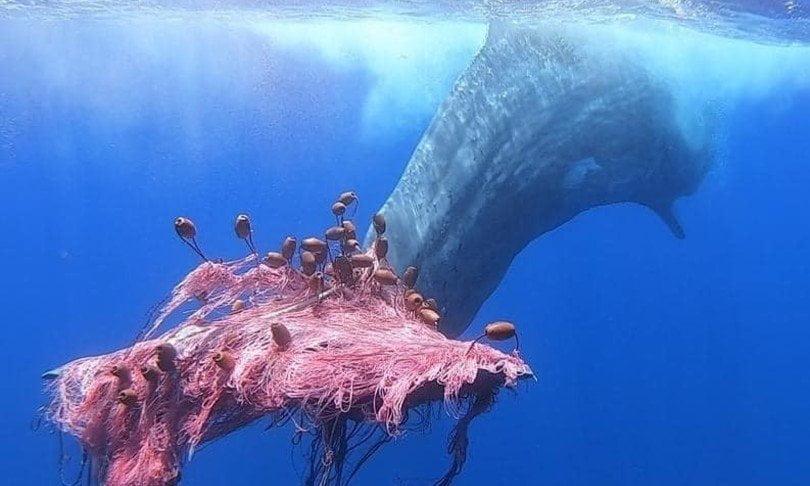Ghost net: le reti da pesca che soffocano gli oceani