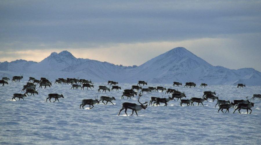 Alaska: ennesimo colpo di coda dell'amministrazione Trump