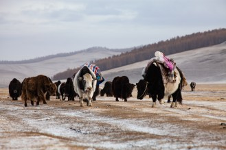 Nomads on the way to their winter place