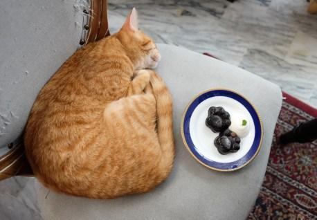 高雄市前金區|外帶一隻貓 Miao togo 貓奴必朝聖 清爽外觀貓咪餐廳 環境乾淨 餐點價位親民