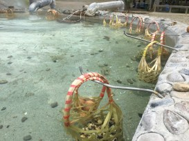 hot spring (3)