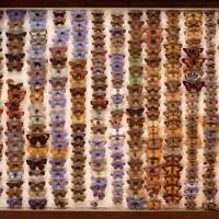 Word Mystery: butterfly / mariposa / papillon / farfalla