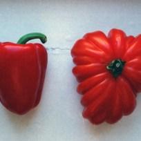 tomatocapsicum