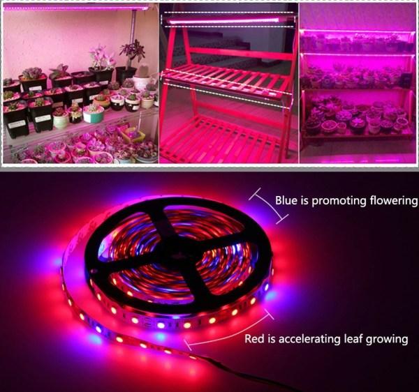 novenyvilagitas-Led-szalag-piros-kek-600x562 Növényvilágítás Led szalag piros-kék