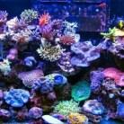 aquarium-1 Akvárium ledvilágítás ötletek Tippek