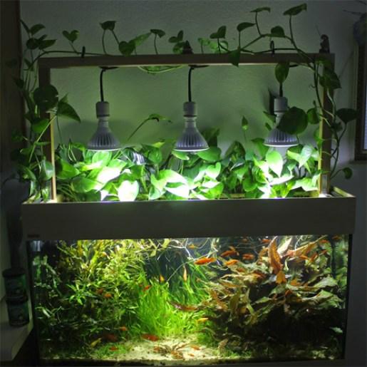 függesztett-ledvilágítás Akvárium ledvilágítás ötletek Tippek