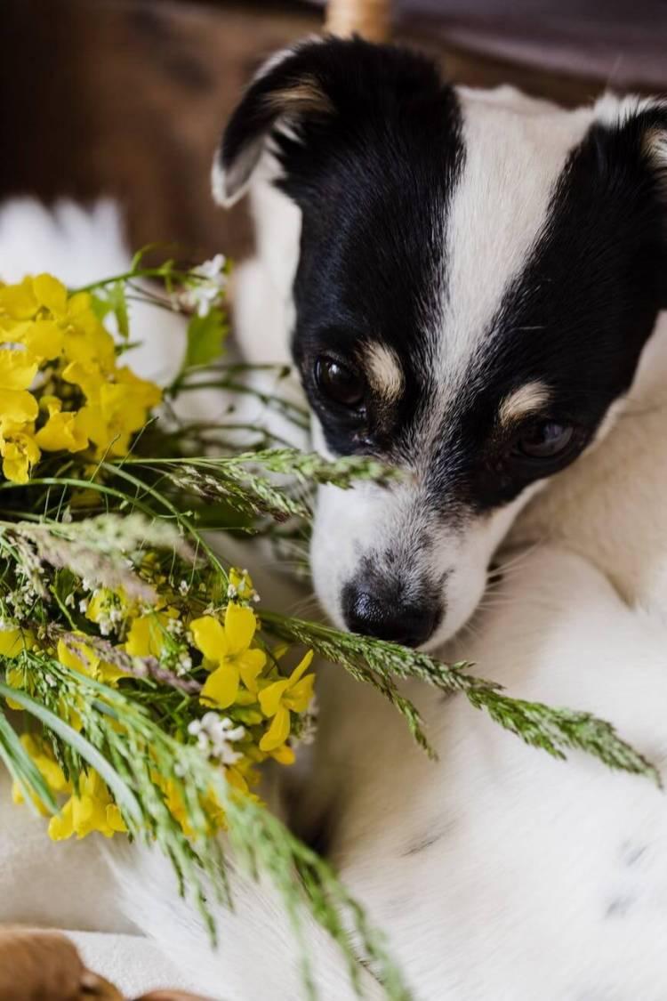 rendez-vous avec un naturopathe animalier explique les étapes à suivre pour prendre rendez-vous avec le domaine du chien.
