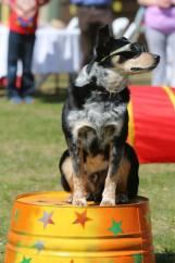Jake and LEDR Dog Training