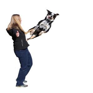 Jake doing a trick with Laura LEDR Dog Training