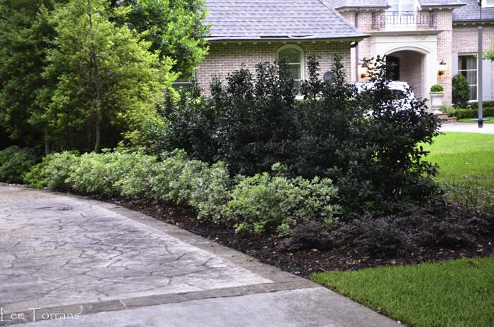 Fafardflowering arbustos para la caída