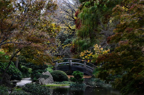 Fall_Color_Japanese_Garden