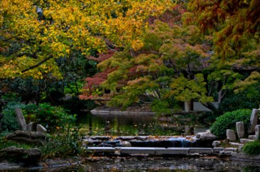 Fall_Color_Japanese_Garden_2