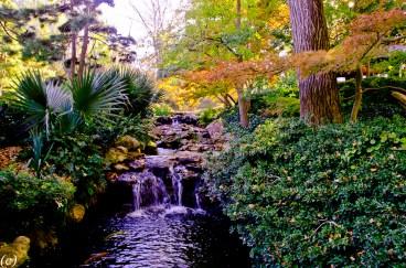 Japanese_Garden-3