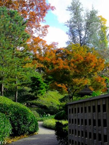 Japanese_Garden-4