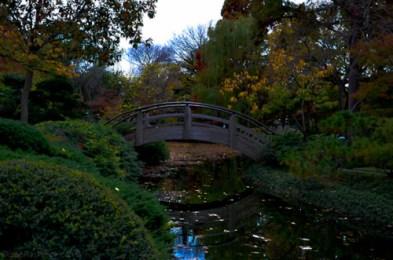Japanese_Moon_Bridge