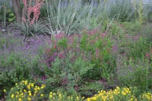 Salvia Gregii