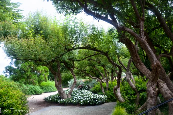 Poetry_Garden_Arboretum_Lee_Ann_Torrans-15