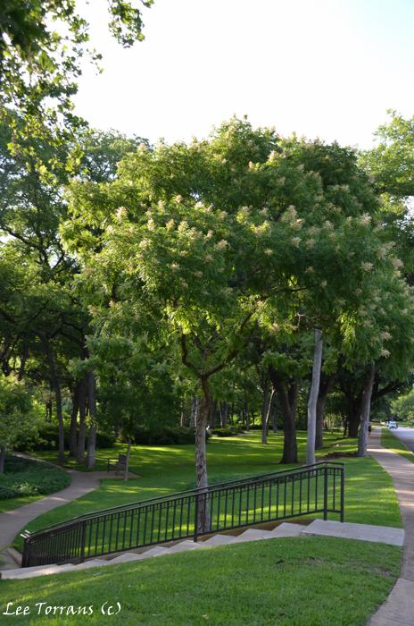 Fern Garden Flippen Park: Highland Park, Texas