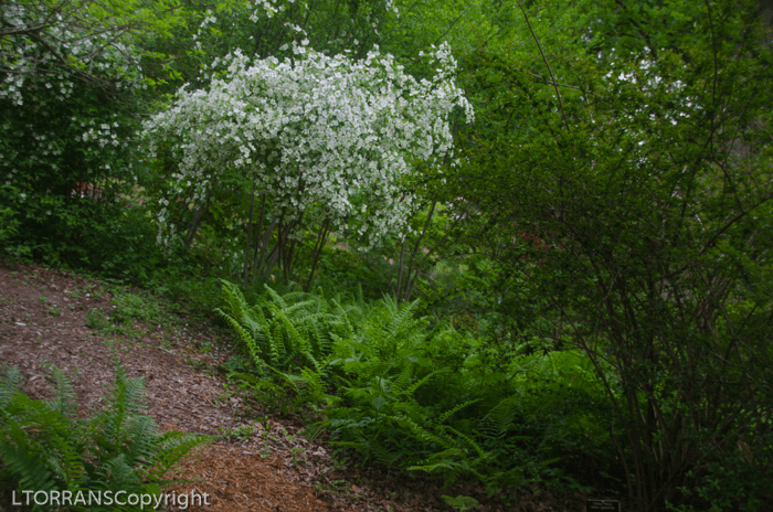 Wood fern forest in Texas