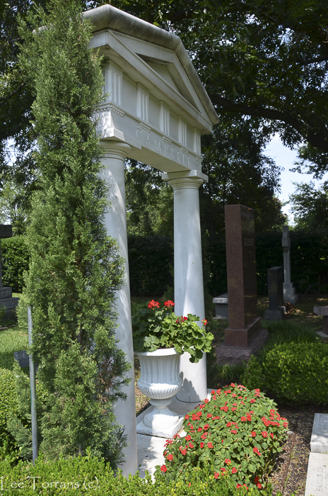 Cedars a woody shrub in a cemetery planting.