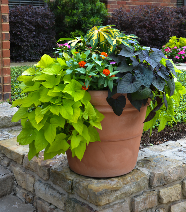 Plano Flowering Pot Ideas