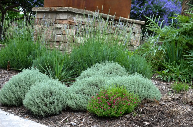June Perennial Gardening Texas