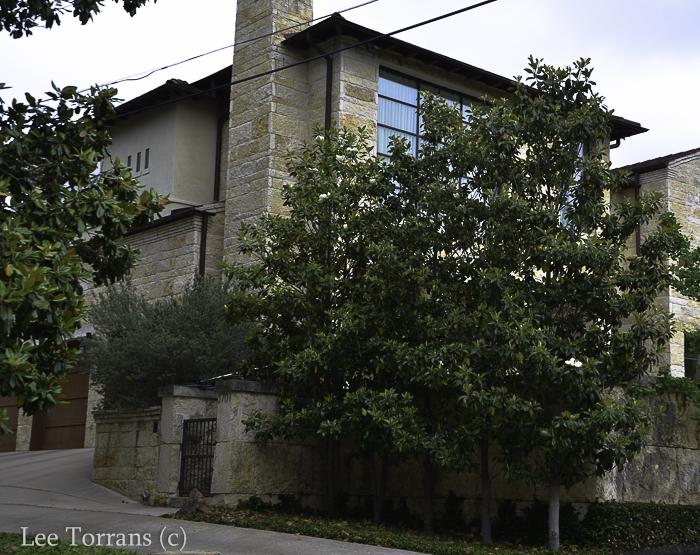 Magnolia Tree Hedge Row