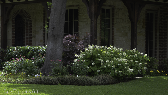 Hostas Dallas Landscaping Lee Ann Torrans