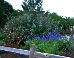 June Blooming Perennials