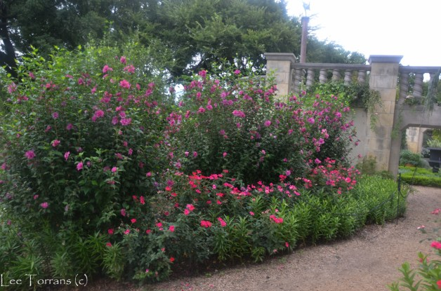 Double_Altheas_Arboretum_Lee_Ann_Torrans