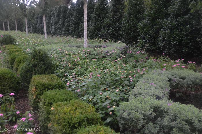 Mozelle_Pink_Yellow_Lantana_Arboretum_Lee_Ann_Torrans