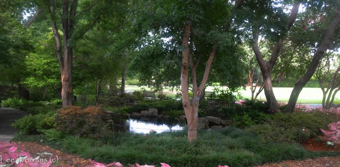 Fern Garden Arboretum