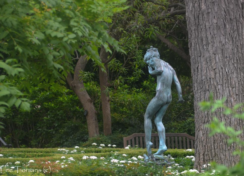 Woodland Nymph Garden Dallas Arboretum