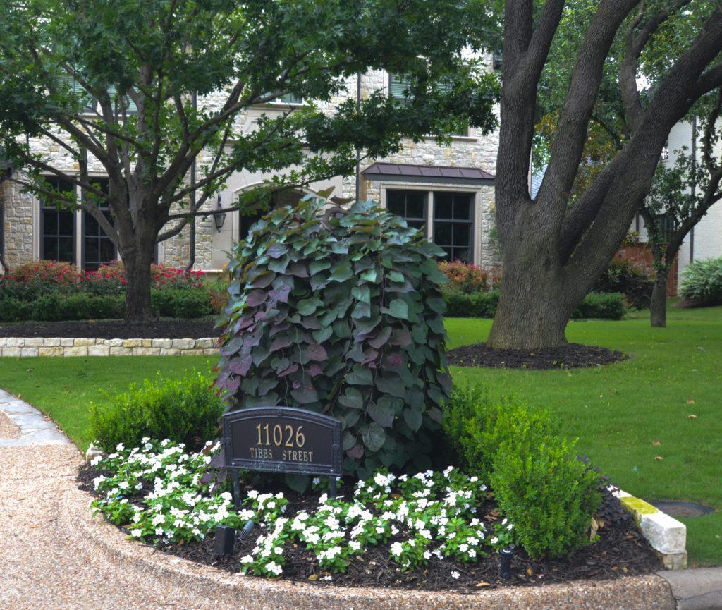 Flowering Trees In Texas An Overview Lee Ann Torrans Gardening