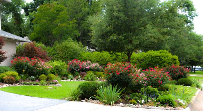 Red and pink Knockout Shrub roses with perennials and evergreen shrubs. Iris and day lilies.