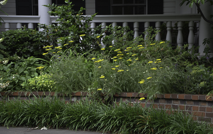 Texas Perennial Garden Top Ten Summer Perennials Lee Ann Torrans