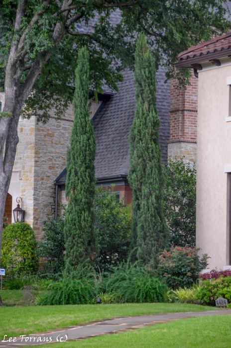 Cedars in dallas landscaping lee ann torrans gardening for Italian landscape design