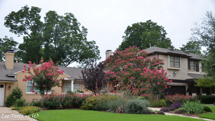Landscaping can change a home's appearance. Lovely example of traditional and native Texas plants.