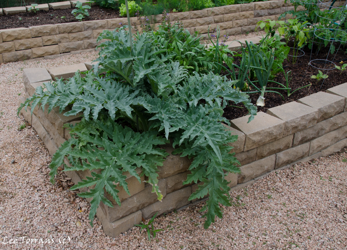 Large-Green-Spikey-Leafed-Plants-Raised-Bed-Gardening-Texas-Landscape-Design (1 of 1)